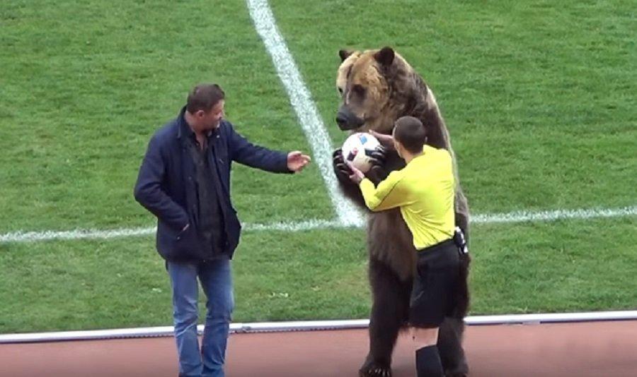 Μια πραγματική αρκούδα οργάνωσε εξέδρα σε ματς στη Ρωσία! (vid)