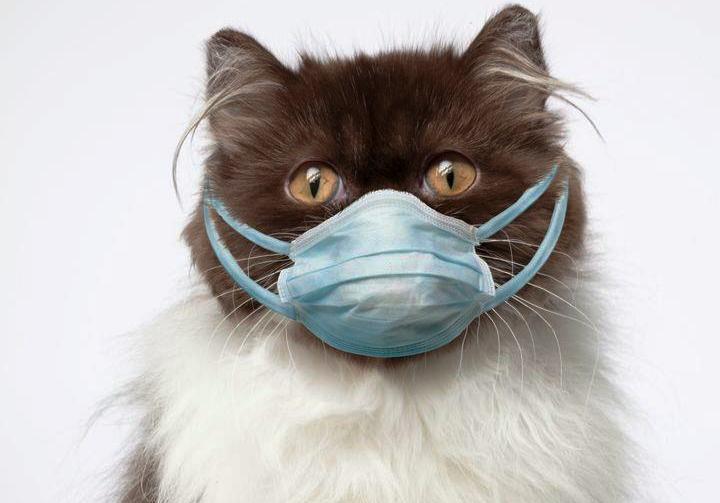 Κινεζικά ΜΜΕ: Οι γάτες μπορούν να κολλήσουν τον ιό από στενή επαφή με ανθρώπους