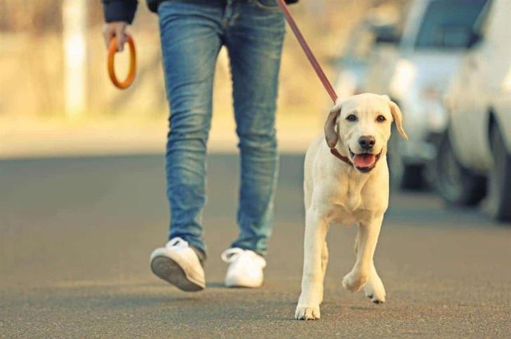 Χωρίς sms η βόλτα των κατοικίδιων ζώων
