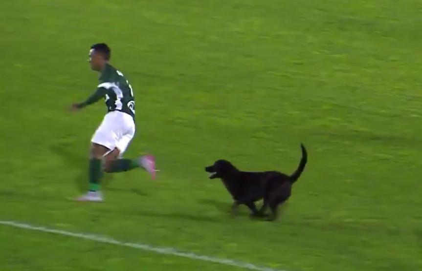 Σκύλος πήρε στο κυνήγι παίκτη στη Βραζιλία! (video)