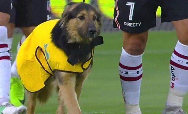 Μπήκαν στο γήπεδο συνοδευόμενοι από σκύλους (vid)